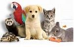 animaux domestique 1s